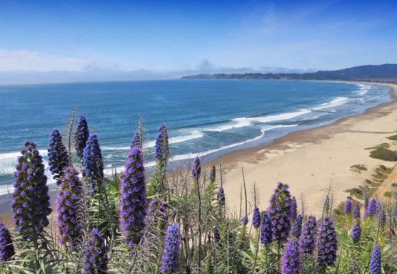 Springtime Yoga & Meditation Retreat at Stinson Beach