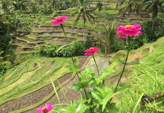 BALI BLISS: WELLNESS RETREAT