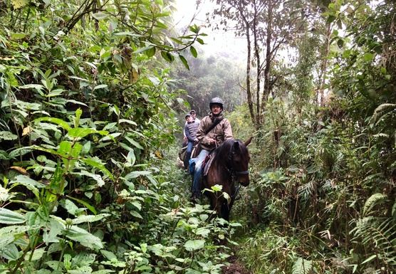 Horseback riding in Ecuador - Andes & Cloud Forest