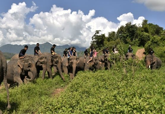 F06 – FULL DAY – ELEPHANT INTERACTIONS . PAK OU CAVES . KUANG SI WATER