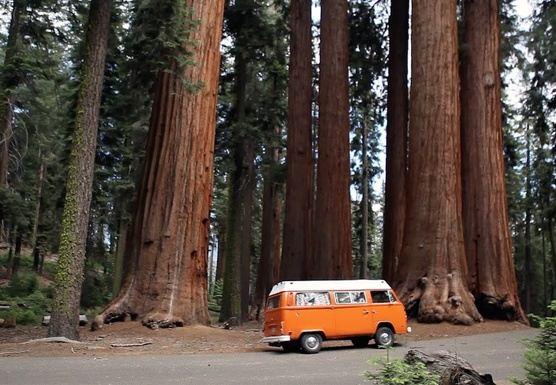 Sequoia National Park: Rest & Rejuvenate Yoga Retreat- April 2018