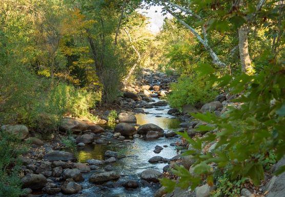 Sequoia National Park: Rest & Rejuvenate Yoga Retreat-2018