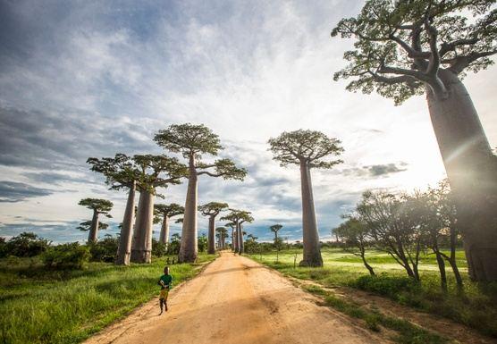 Meet Madagascar