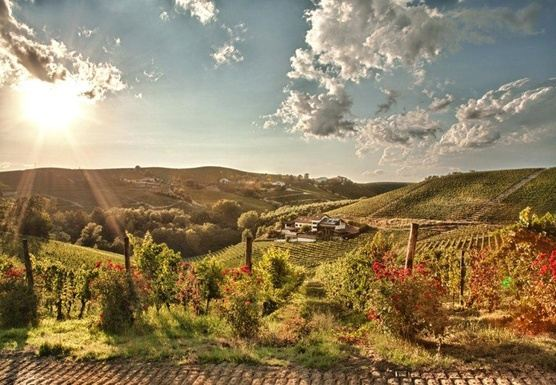 Culture and Yoga Retreat to Northern Italian Vineyards