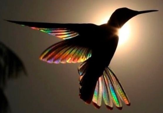 A Songbird Retreat: Realigning your voice and body to awaken spirit