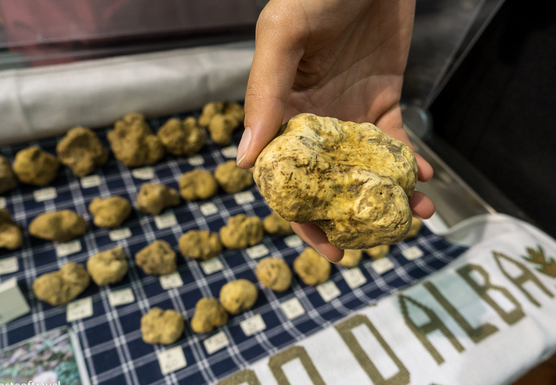Italy: Discover Slow Food (White Truffles)