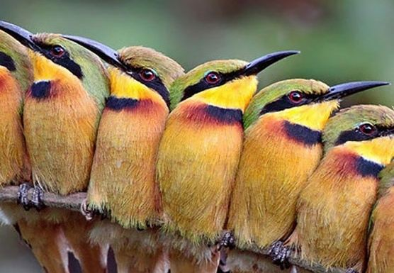 A Songbird Retreat: Singing together