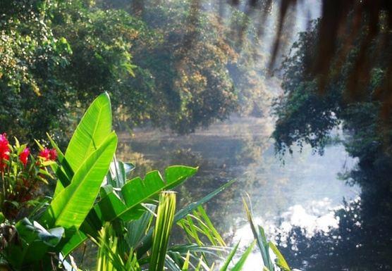 Amazon Rainforest - Classic Style