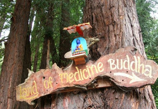 Yoga and Meditation Gratitude Retreat, Santa Cruz Mountains
