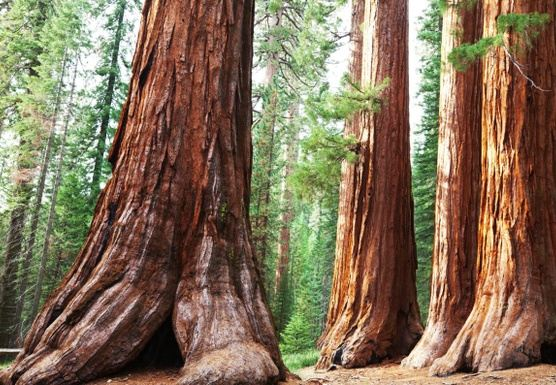 Sequoia National Park: Rest & Rejuvenate Yoga Retreat Weekend 2