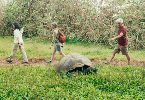 Galapagos Best Tour + Airline Ticket - Basic Style in 4 days