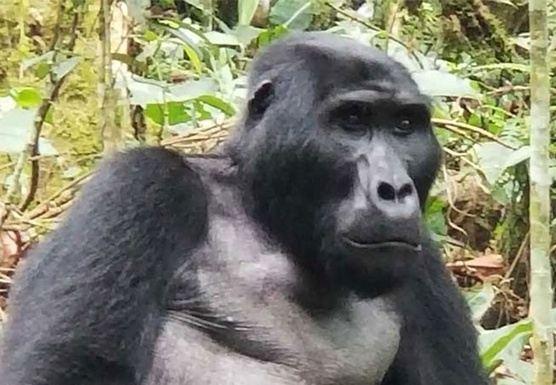 Africa: Uganda Safari Plus Mountain Gorilla Trekking