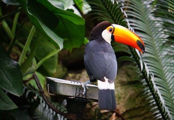 Wellness and Adventure in Costa Rica