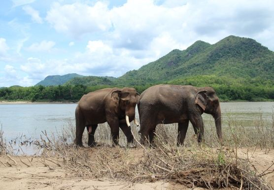 H03HALF DAY Elephant Mahout Training course