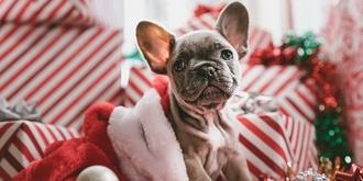 Santa's Grrrotto