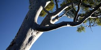 Six-week Dharma Study class series - Sydney