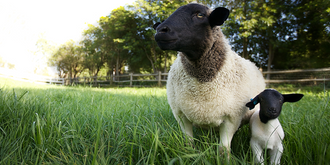 The Biggest Little Farm -Transitions Film Festival Fundraiser