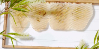 Kids Honey Making Workshop | The Grounds Easter School Holidays