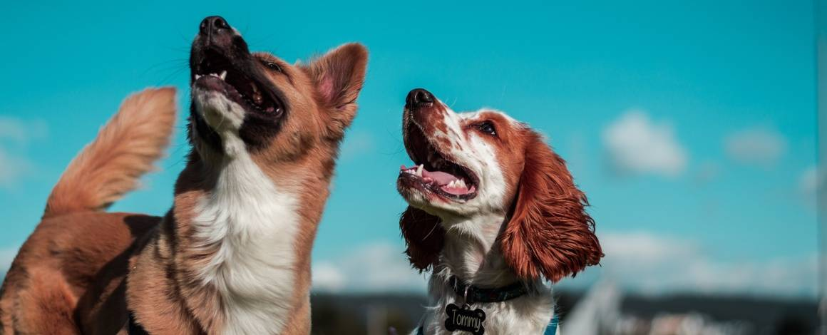 Two dogs with a blue sky background