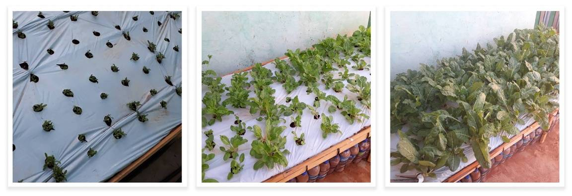 An ecobrick garden in Waihenya Jazan's backyard, slowly growing into fresh crops.