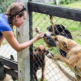 Volunteer caring for dogs - Animal Care project -Samaná
