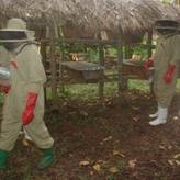 Bee keeping in Rural Mukono