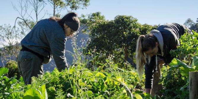 ORGANIC FARMING LOVER / SPECIALIST