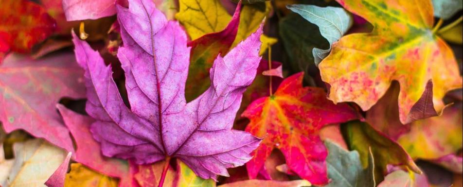 10 Inspirational Fall Quotes For Career Development Idealist