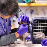 hospital staff examine dog's teeth