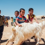 Syrian children with their new goat