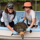 Participate and enjoy our long-term research with sea turtles in their foraging areas.