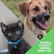 Logo of Harris County Animal Shelter